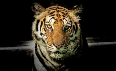 Photo by Sayantan Kundu on Pexels.com