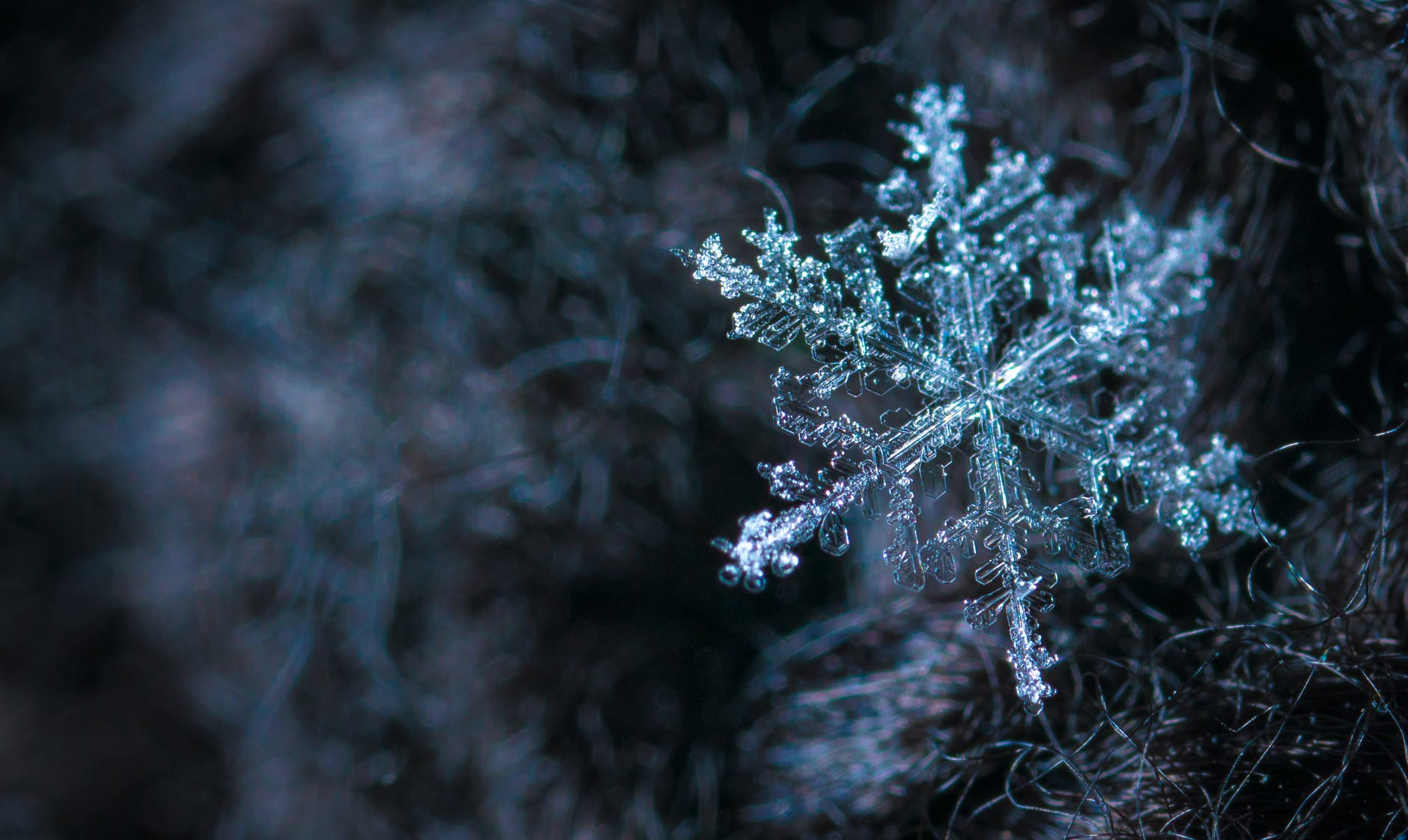 close up photography of snowflake